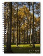 Sunny Larch Grove Spiral Notebook