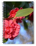 Sunny Red Camelias Spiral Notebook