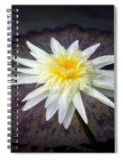 Sunny Side Up Spiral Notebook