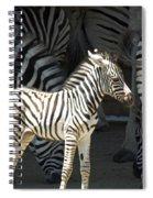 Sunny Zebra Spiral Notebook
