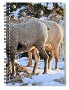 Sunrise Club Spiral Notebook