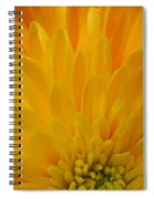 Sunrise Dahlia Abstract Spiral Notebook
