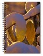 Sunrise On Autumn Snow Spiral Notebook
