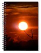 Sunset - Stuck On Tree Branch Spiral Notebook
