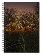 Sunset At The Presidio   Spiral Notebook