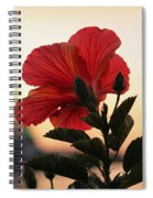 Sunset Flower Spiral Notebook
