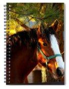 Sunset Horse Spiral Notebook