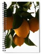 Sunset Lemons Spiral Notebook