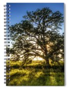 Sunset Oak Spiral Notebook