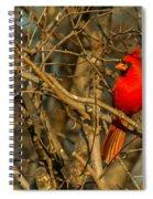 Sunset On A Norhern Cardinal Spiral Notebook