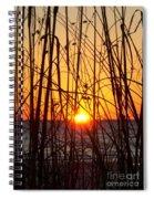 Sunset Through Grasses Spiral Notebook