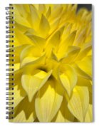 Sunshine Dahlia Spiral Notebook