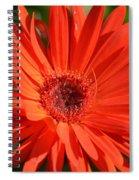 Sunshine Gerber Spiral Notebook