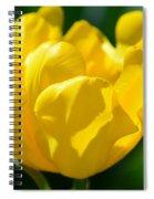 Sunshine Tulip Spiral Notebook