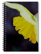 Sunshine Yellow Daffodil Spiral Notebook
