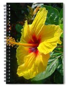 Sunshine Yellow Hibiscus With Red Throat Spiral Notebook