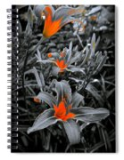 Suntouched Hearts Spiral Notebook