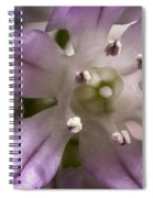 Super Close Up Of A Chive Flower Spiral Notebook