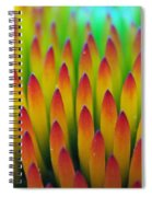Super Macro Of Echinacea Cone Flower Spiral Notebook