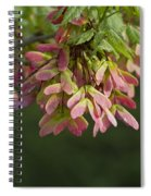 Super Sweet Winged Maple Seeds Spiral Notebook