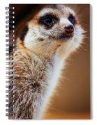 Suricata Spiral Notebook