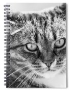 Surprised Cat Spiral Notebook