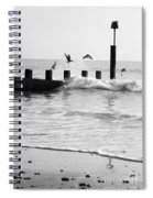 Surprised Seagulls Spiral Notebook
