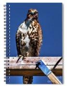 Swainson Hawk Spiral Notebook