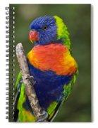 Swainsons Lorikeet Spiral Notebook