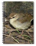 Swainsons Warbler Spiral Notebook