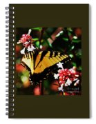 Swallowback Butterfly # 1 Spiral Notebook