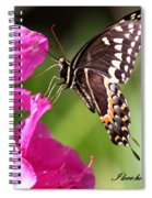 Swallowtail And Azalea - Love Spiral Notebook