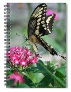 Swallowtail Butterfly 01 Spiral Notebook