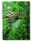 Swallowtail Caterpillar Spiral Notebook