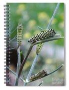Swallowtail Caterpillars On Dillweed Spiral Notebook