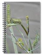 Swallowtail Feast Spiral Notebook