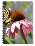 Looking Up At Swallowtail On Coneflower Spiral Notebook