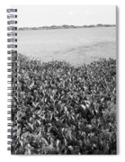 Swamp Hyacinths Water Lillies Black And White Spiral Notebook
