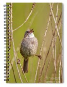 Swamp Sparrow Split Decision Spiral Notebook