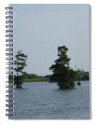 Swamp Tall Cypress Trees  Spiral Notebook