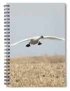 Swan Coming In For A Landing Spiral Notebook