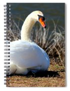 Swan Protects Her Eggs Spiral Notebook