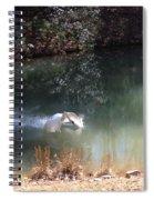Swan Skid Spiral Notebook