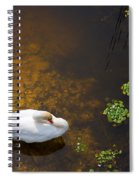 Swan With Sun Reflection On Water. Spiral Notebook