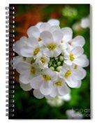 Sweet Alyssum Spiral Notebook