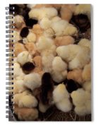 Sweet Baby Chicks For Sale Spiral Notebook