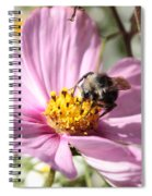 Sweet Bee On Pink Cosmos Spiral Notebook