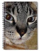 Cat - Sweet - Boy Spiral Notebook