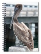 Sweet Brown Pelican - Digital Painting Spiral Notebook