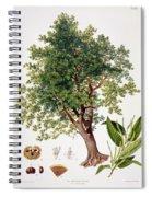 Sweet Chestnut Spiral Notebook